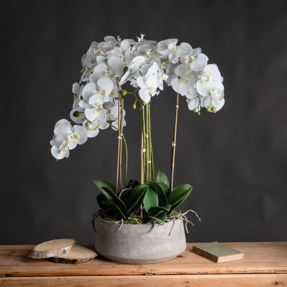 Large White Orchid In Stone Pot Accessories From Breeze Furniture Uk